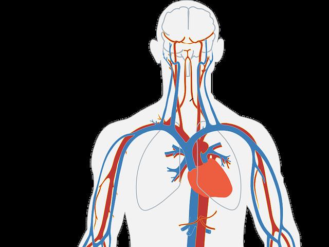 здраве, сърце, кръвно, диабет, дневно меню, калций